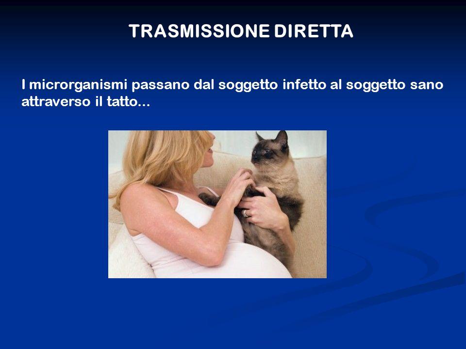TRASMISSIONE DIRETTA I microrganismi passano dal soggetto infetto al soggetto sano attraverso il tatto...