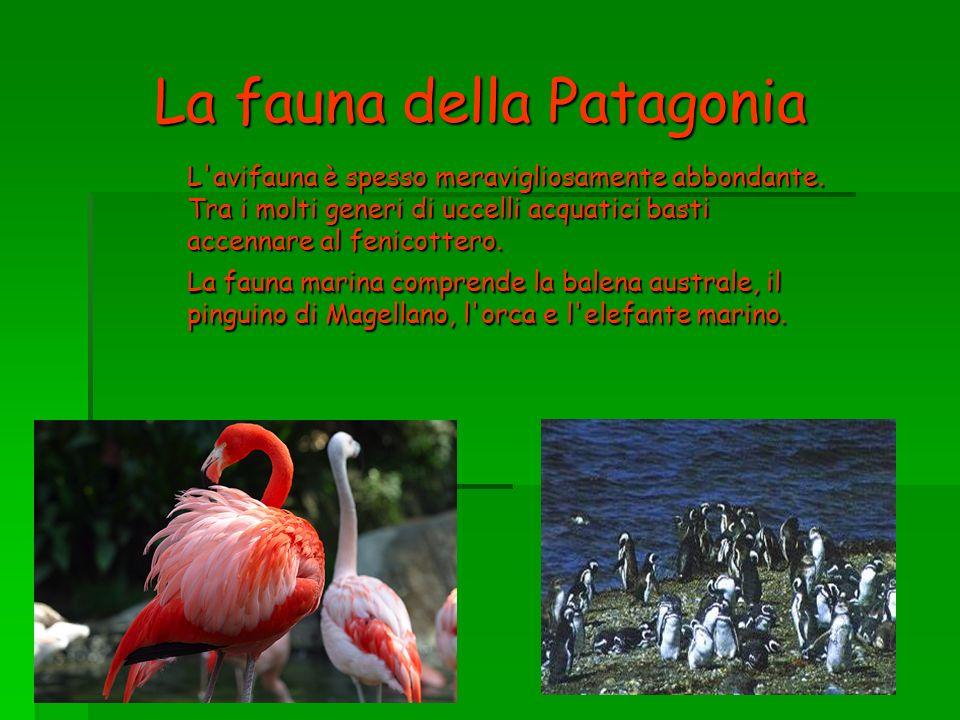 La fauna della Patagonia L'avifauna è spesso meravigliosamente abbondante. Tra i molti generi di uccelli acquatici basti accennare al fenicottero. La
