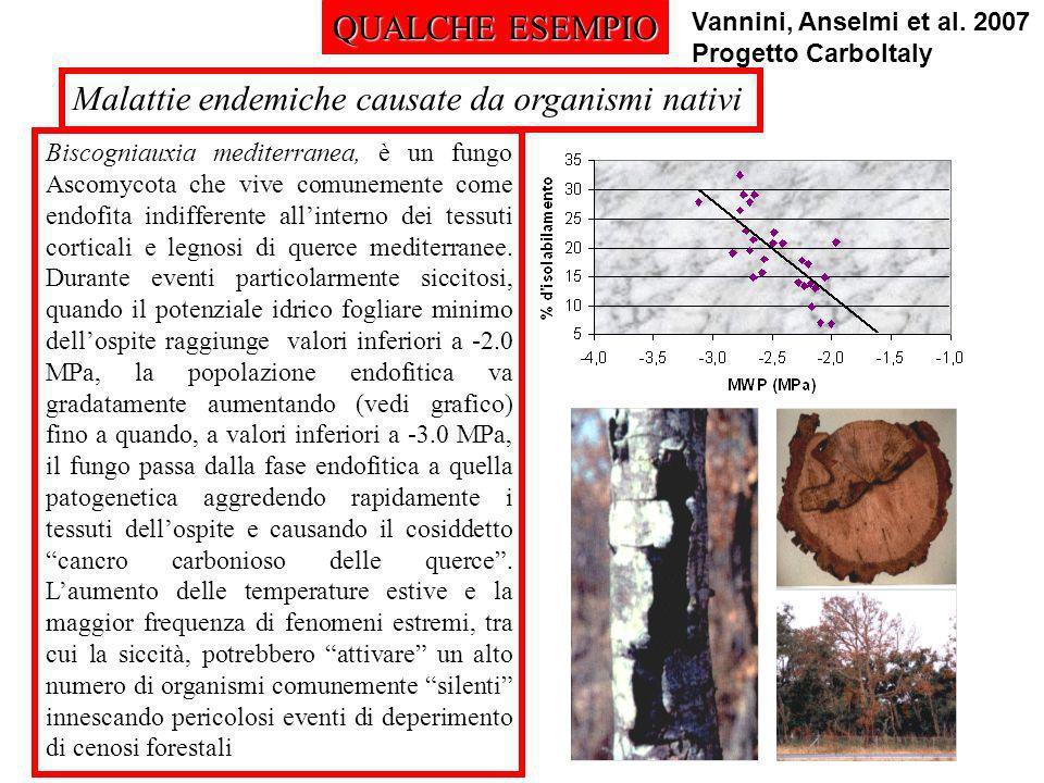 QUALCHE ESEMPIO Malattie endemiche causate da organismi nativi Biscogniauxia mediterranea, è un fungo Ascomycota che vive comunemente come endofita in