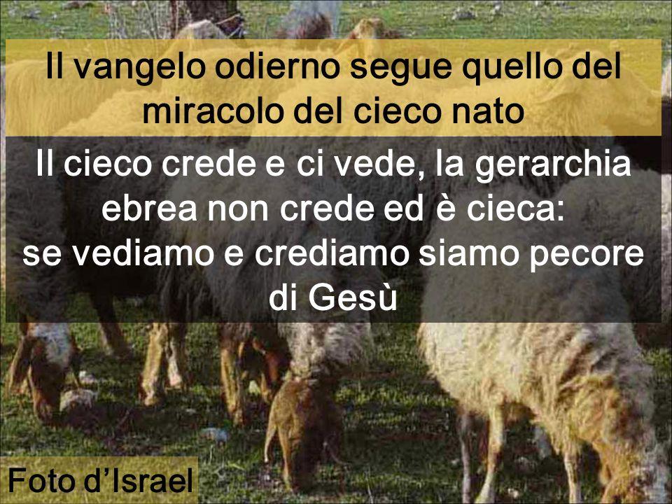 Il vangelo odierno segue quello del miracolo del cieco nato Il cieco crede e ci vede, la gerarchia ebrea non crede ed è cieca: se vediamo e crediamo siamo pecore di Gesù Foto dIsrael