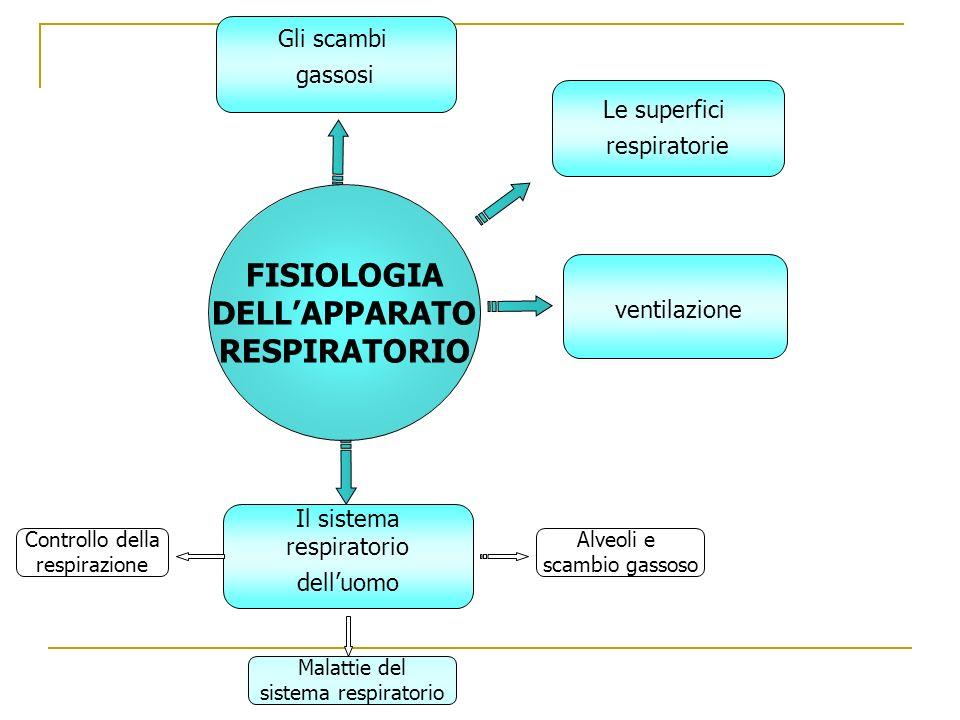 Controllo della respirazione ventilazione FISIOLOGIA DELLAPPARATO RESPIRATORIO Il sistema respiratorio delluomo Malattie del sistema respiratorio Le superfici respiratorie Gli scambi gassosi Alveoli e scambio gassoso