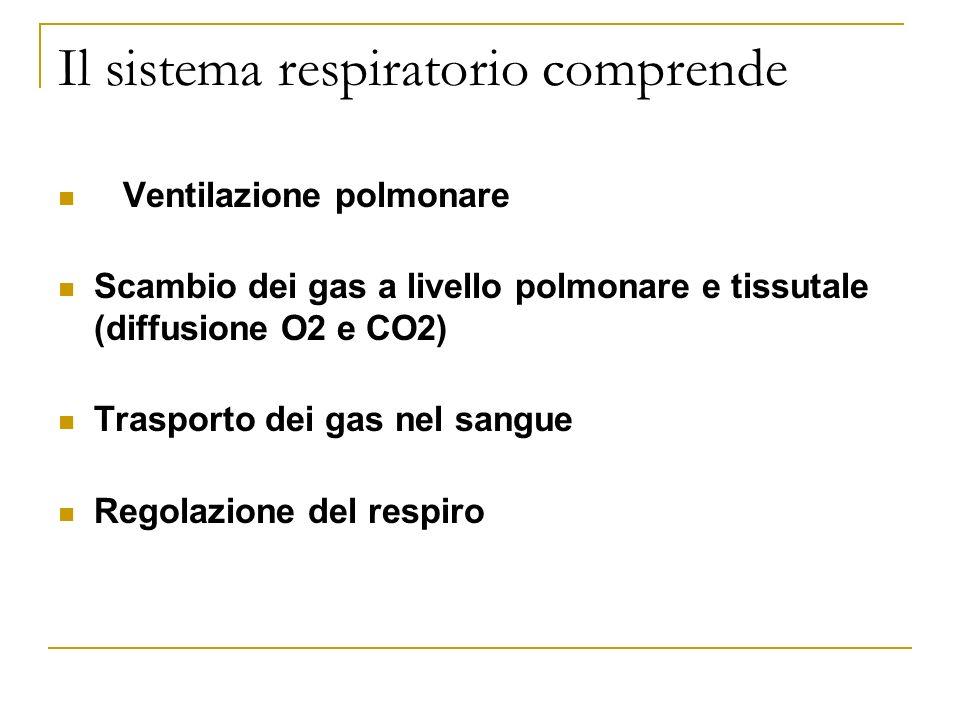 Il sistema respiratorio comprende Ventilazione polmonare Scambio dei gas a livello polmonare e tissutale (diffusione O2 e CO2) Trasporto dei gas nel sangue Regolazione del respiro