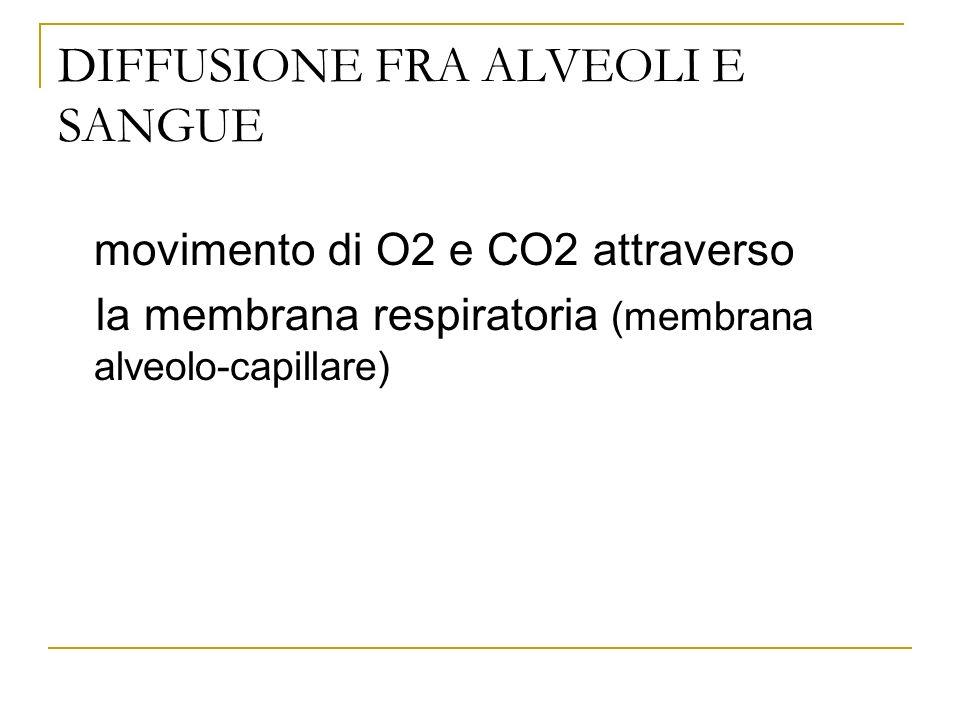DIFFUSIONE FRA ALVEOLI E SANGUE movimento di O2 e CO2 attraverso la membrana respiratoria (membrana alveolo-capillare)
