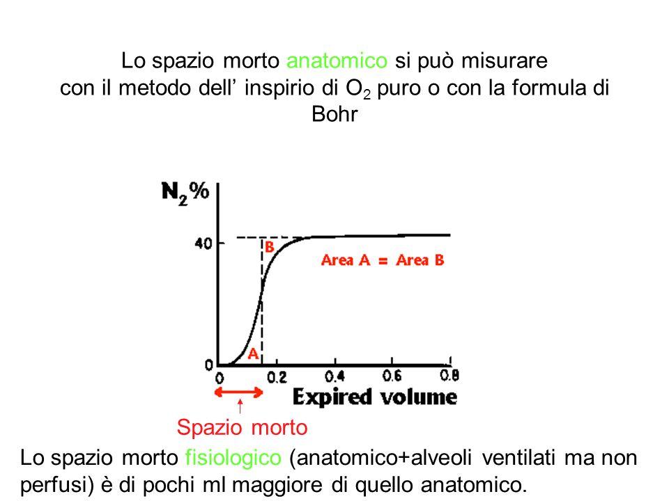 Lo spazio morto anatomico si può misurare con il metodo dell inspirio di O 2 puro o con la formula di Bohr Spazio morto Lo spazio morto fisiologico (a