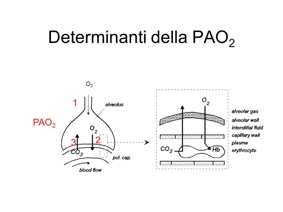 Determinanti della PAO 2 O2O2 1 2 3 PAO 2