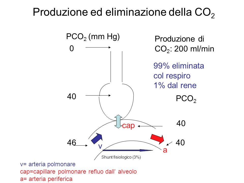 Produzione ed eliminazione della CO 2 Shunt fisiologico (3%) PCO 2 (mm Hg) 0 40 46 PCO 2 a v v= arteria polmonare cap=capillare polmonare refluo dall