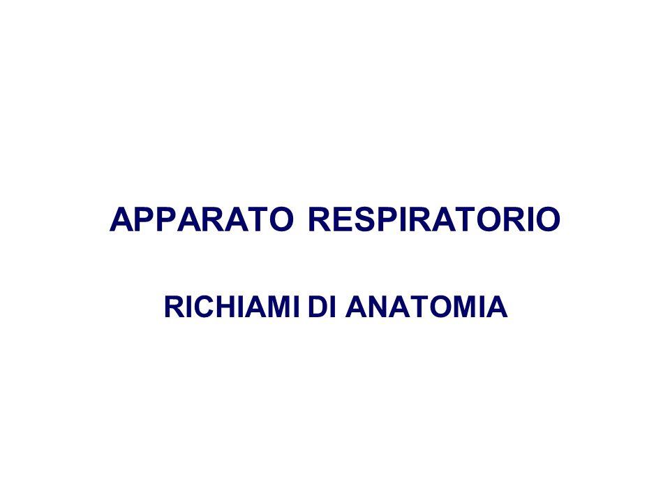 APPARATO RESPIRATORIO RICHIAMI DI ANATOMIA
