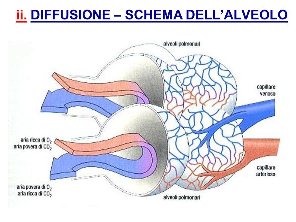 ii. DIFFUSIONE – SCHEMA DELLALVEOLO