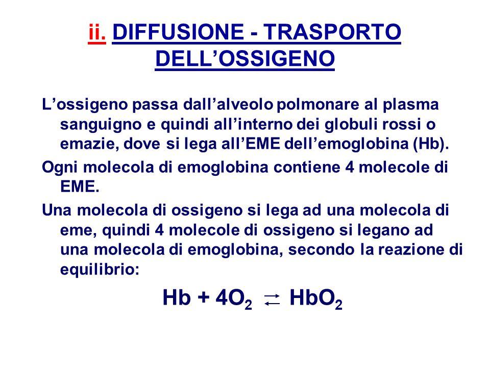 Lossigeno passa dallalveolo polmonare al plasma sanguigno e quindi allinterno dei globuli rossi o emazie, dove si lega allEME dellemoglobina (Hb). Ogn