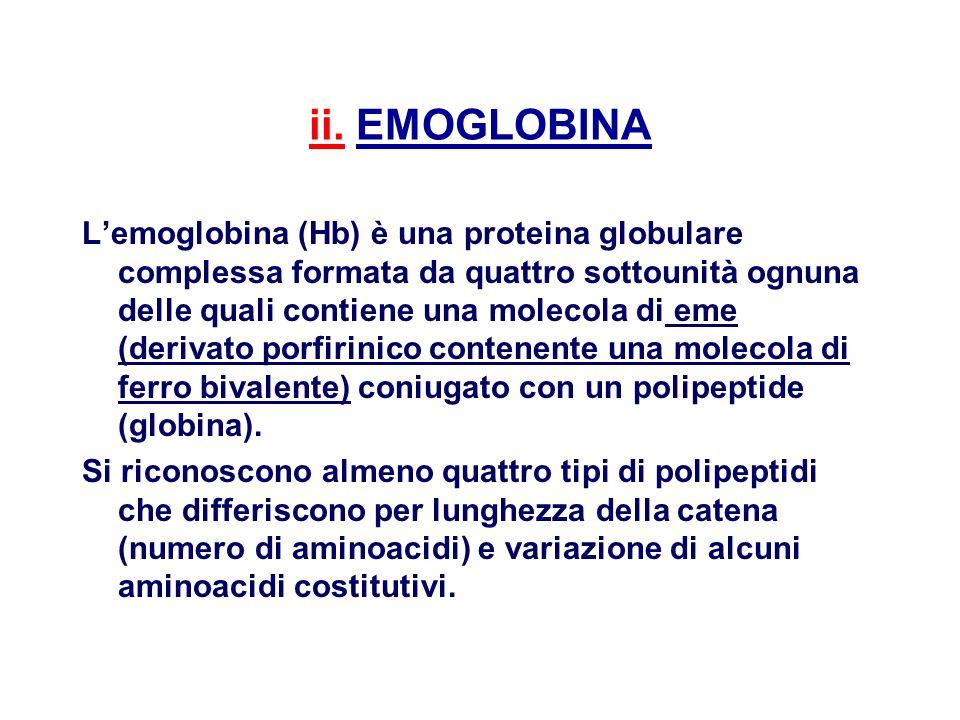 ii. EMOGLOBINA Lemoglobina (Hb) è una proteina globulare complessa formata da quattro sottounità ognuna delle quali contiene una molecola di eme (deri