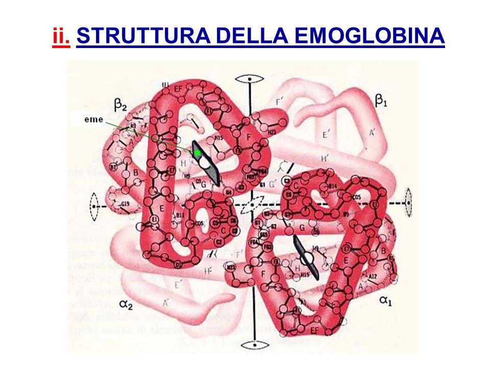 ii. STRUTTURA DELLA EMOGLOBINA