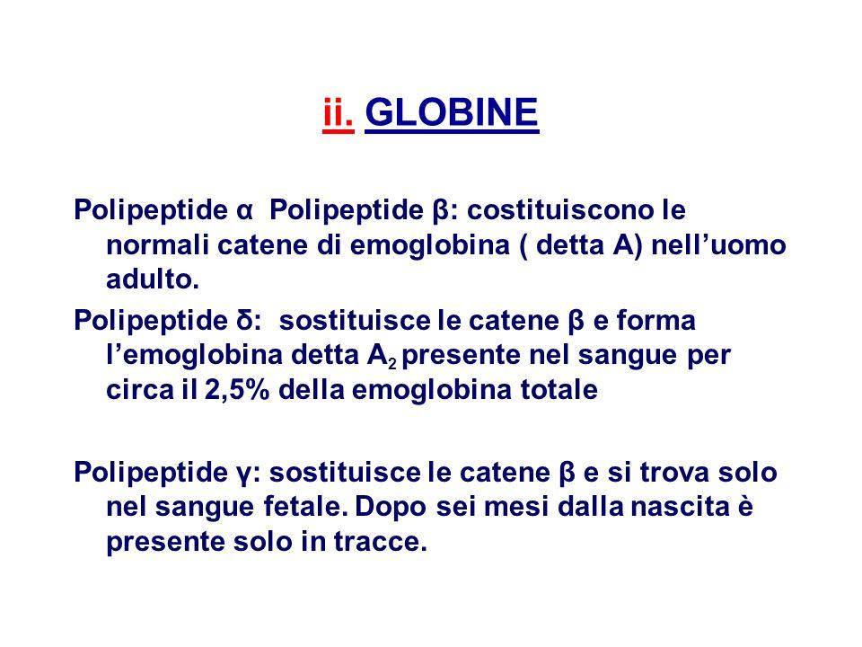 ii. GLOBINE Polipeptide α Polipeptide β: costituiscono le normali catene di emoglobina ( detta A) nelluomo adulto. Polipeptide δ: sostituisce le caten