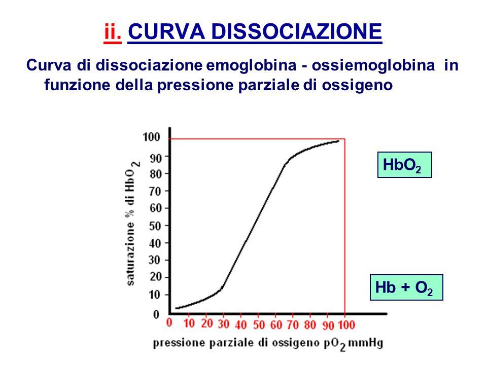 ii. CURVA DISSOCIAZIONE Curva di dissociazione emoglobina - ossiemoglobina in funzione della pressione parziale di ossigeno Hb + O 2 HbO 2