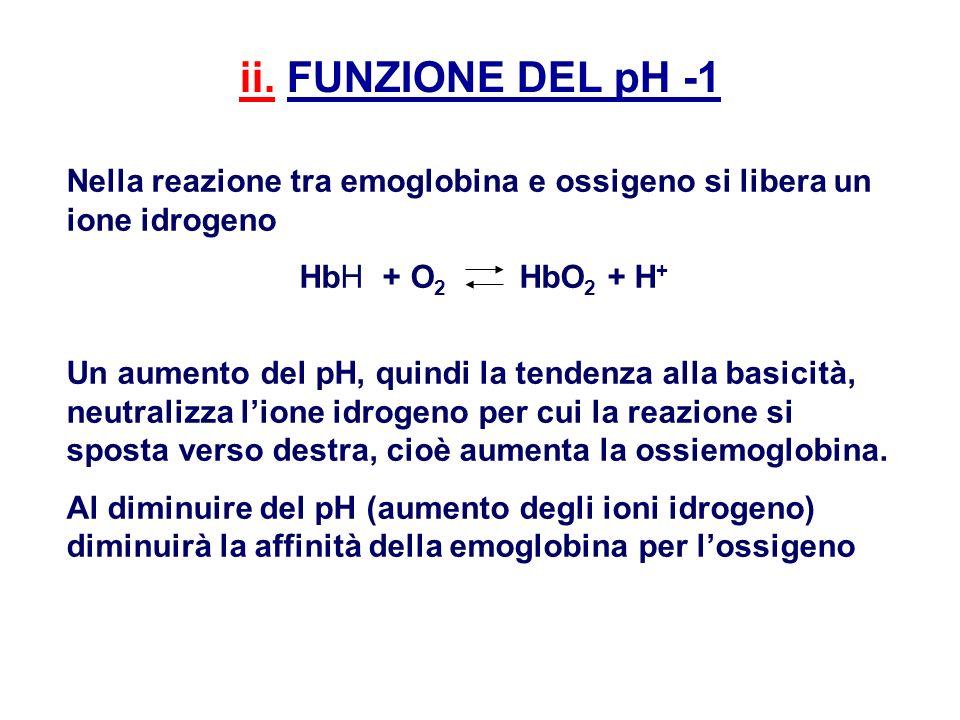 ii. FUNZIONE DEL pH -1 Nella reazione tra emoglobina e ossigeno si libera un ione idrogeno HbH + O 2 HbO 2 + H + Un aumento del pH, quindi la tendenza