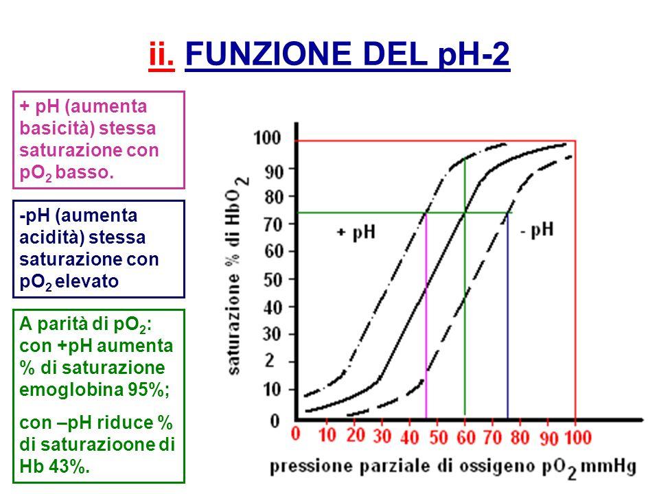 ii. FUNZIONE DEL pH-2 + pH (aumenta basicità) stessa saturazione con pO 2 basso. A parità di pO 2 : con +pH aumenta % di saturazione emoglobina 95%; c