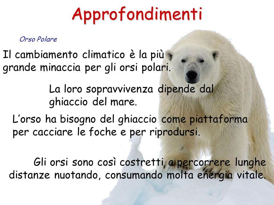 Approfondimenti Il cambiamento climatico è la più grande minaccia per gli orsi polari. Orso Polare La loro sopravvivenza dipende dal ghiaccio del mare