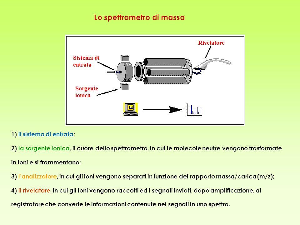 1) il sistema di entrata; 2) la sorgente ionica, il cuore dello spettrometro, in cui le molecole neutre vengono trasformate in ioni e si frammentano; 3) lanalizzatore, in cui gli ioni vengono separati in funzione del rapporto massa/carica (m/z); 4) il rivelatore, in cui gli ioni vengono raccolti ed i segnali inviati, dopo amplificazione, al registratore che converte le informazioni contenute nei segnali in uno spettro.