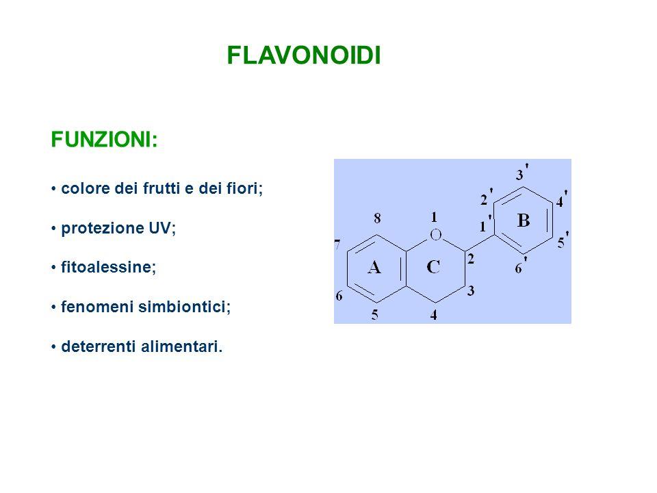 FLAVONOIDI FUNZIONI: colore dei frutti e dei fiori; protezione UV; fitoalessine; fenomeni simbiontici; deterrenti alimentari.