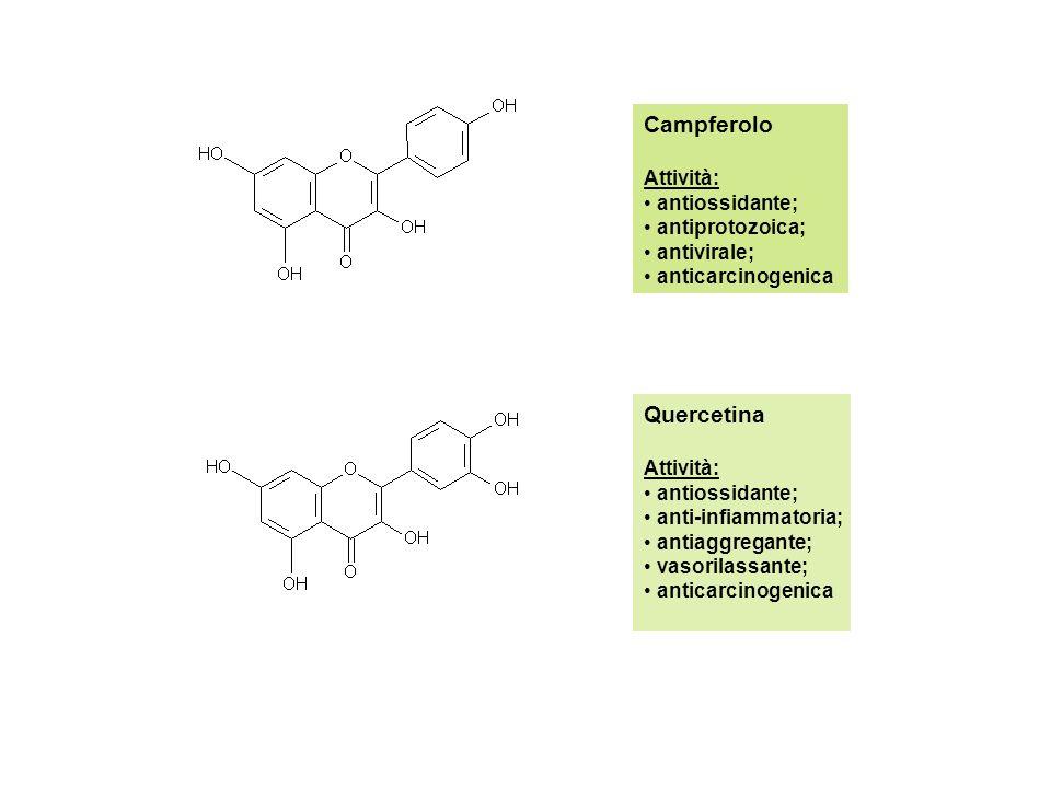 Campferolo Attività: antiossidante; antiprotozoica; antivirale; anticarcinogenica Quercetina Attività: antiossidante; anti-infiammatoria; antiaggregante; vasorilassante; anticarcinogenica