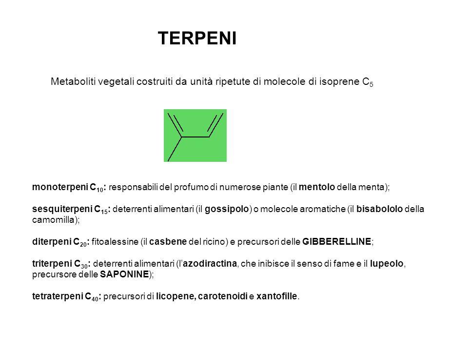 TERPENI monoterpeni C 10 : responsabili del profumo di numerose piante (il mentolo della menta); sesquiterpeni C 15 : deterrenti alimentari (il gossipolo) o molecole aromatiche (il bisabololo della camomilla); diterpeni C 20 : fitoalessine (il casbene del ricino) e precursori delle GIBBERELLINE; triterpeni C 30 : deterrenti alimentari (lazodiractina, che inibisce il senso di fame e il lupeolo, precursore delle SAPONINE); tetraterpeni C 40 : precursori di licopene, carotenoidi e xantofille.
