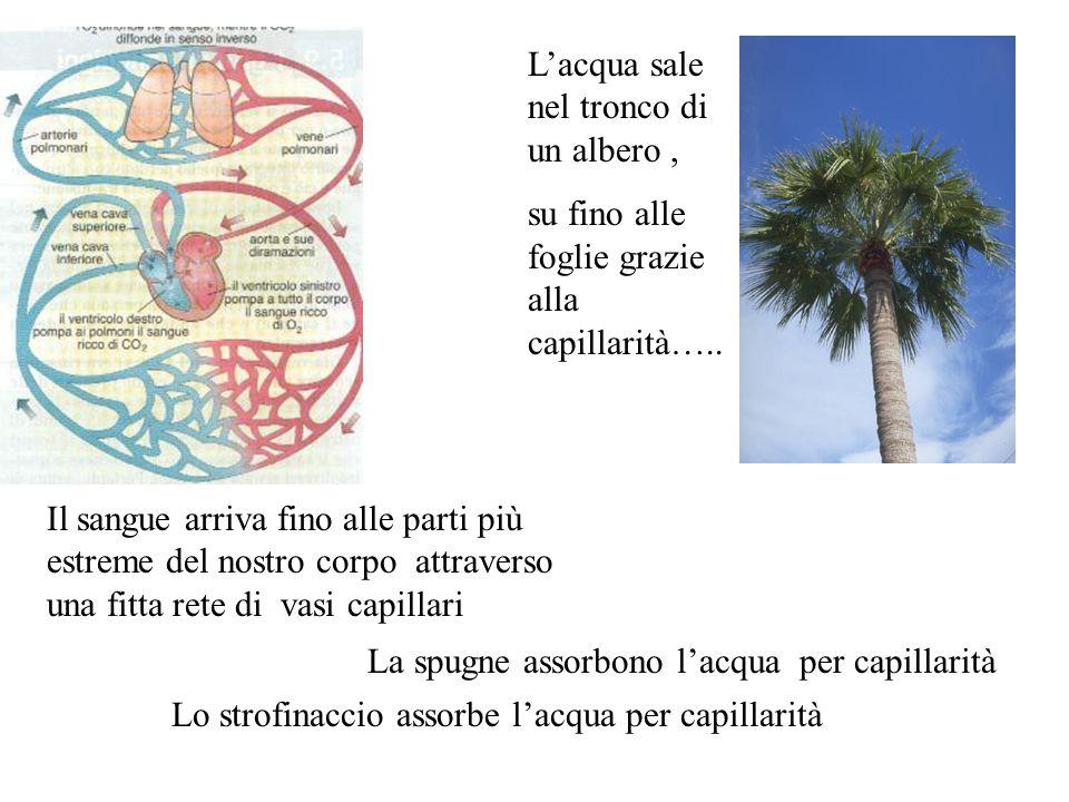 Lacqua sale nel tronco di un albero, su fino alle foglie grazie alla capillarità….. Il sangue arriva fino alle parti più estreme del nostro corpo attr