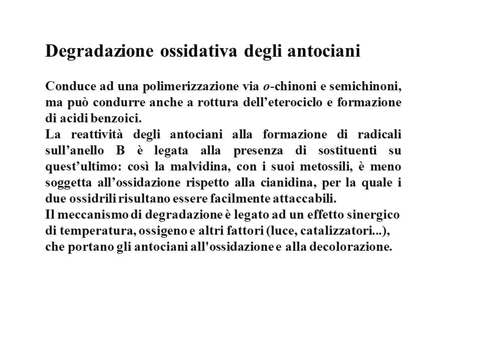 Degradazione ossidativa degli antociani Conduce ad una polimerizzazione via o-chinoni e semichinoni, ma può condurre anche a rottura delleterociclo e