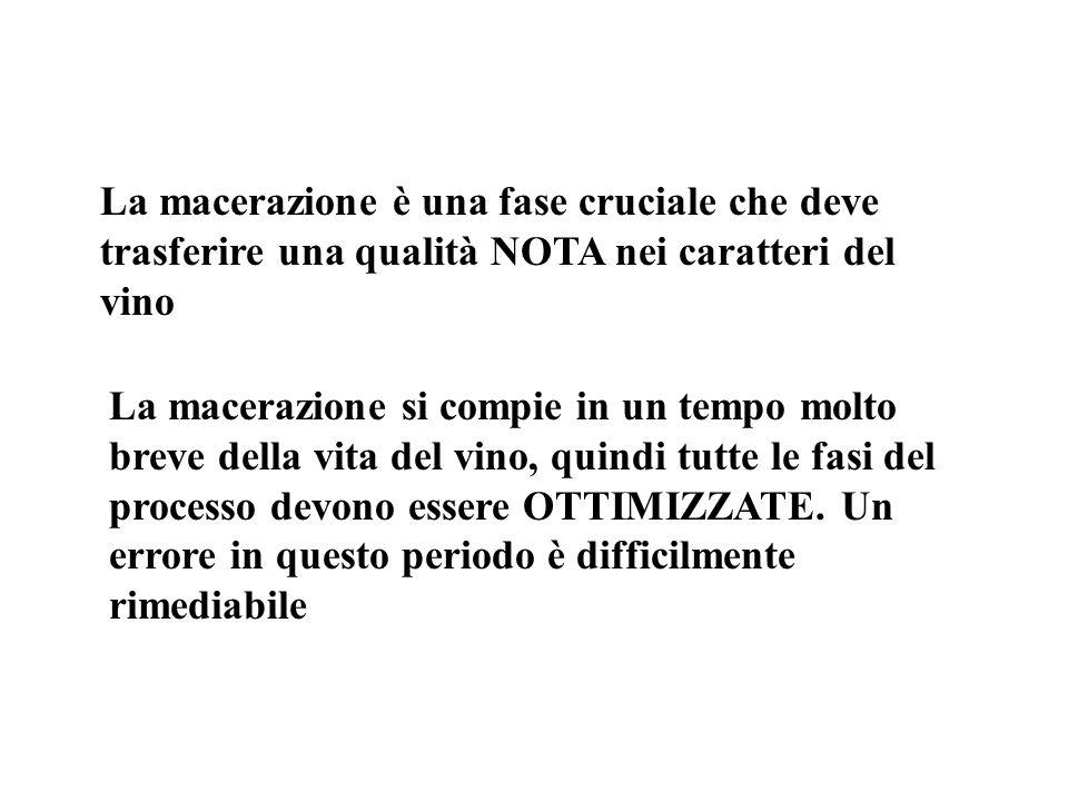 Antociani Cabernet 1