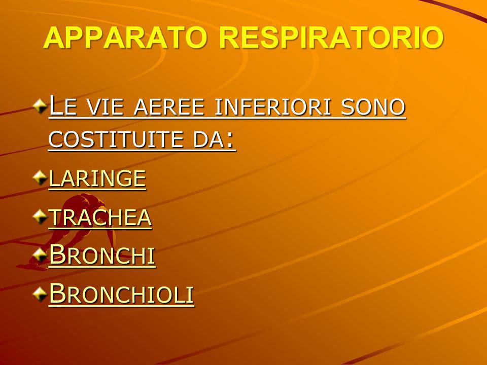 L E VIE AEREE INFERIORI SONO COSTITUITE DA : LARINGE TRACHEA B RONCHI B RONCHI B RONCHIOLI
