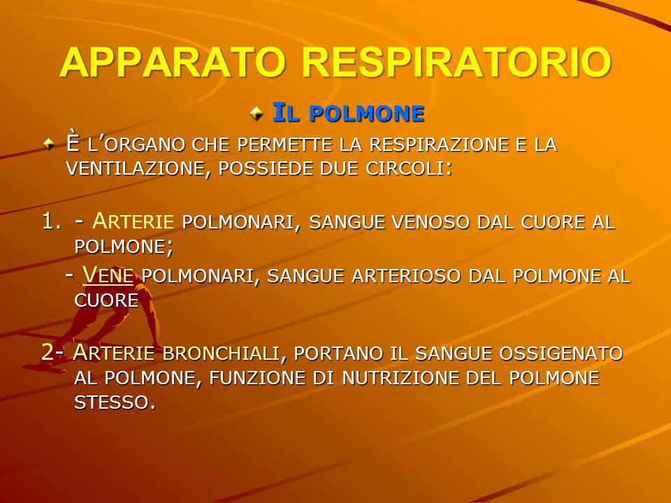 APPARATO RESPIRATORIO I L POLMONE È L ORGANO CHE PERMETTE LA RESPIRAZIONE E LA VENTILAZIONE, POSSIEDE DUE CIRCOLI : 1.- POLMONARI, SANGUE VENOSO DAL C
