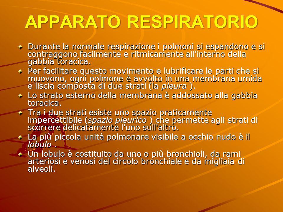 APPARATO RESPIRATORIO Durante la normale respirazione i polmoni si espandono e si contraggono facilmente e ritmicamente all'interno della gabbia torac