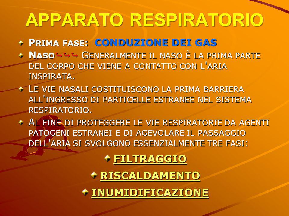APPARATO RESPIRATORIO P RIMA FASE : CONDUZIONE DEI GAS N ASO G ENERALMENTE IL NASO È LA PRIMA PARTE DEL CORPO CHE VIENE A CONTATTO CON L ' ARIA INSPIR