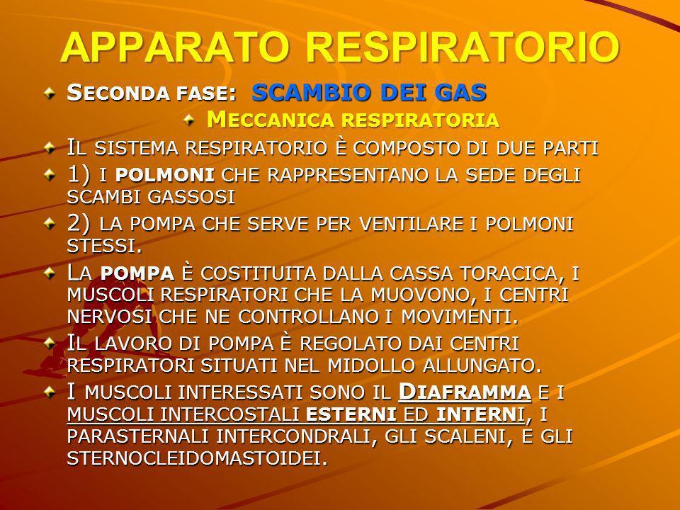 APPARATO RESPIRATORIO SECONDA FASE: SCAMBIO DEI GAS MECCANICA RESPIRATORIA IL SISTEMA RESPIRATORIO È COMPOSTO DI DUE PARTI 1) I POLMONI CHE RAPPRESENT