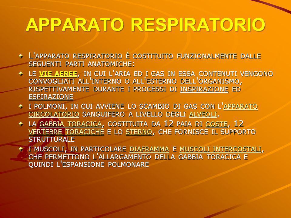 APPARATO RESPIRATORIO L' APPARATO RESPIRATORIO È COSTITUITO FUNZIONALMENTE DALLE SEGUENTI PARTI ANATOMICHE : LE VIE AEREE, IN CUI L ' ARIA ED I GAS IN