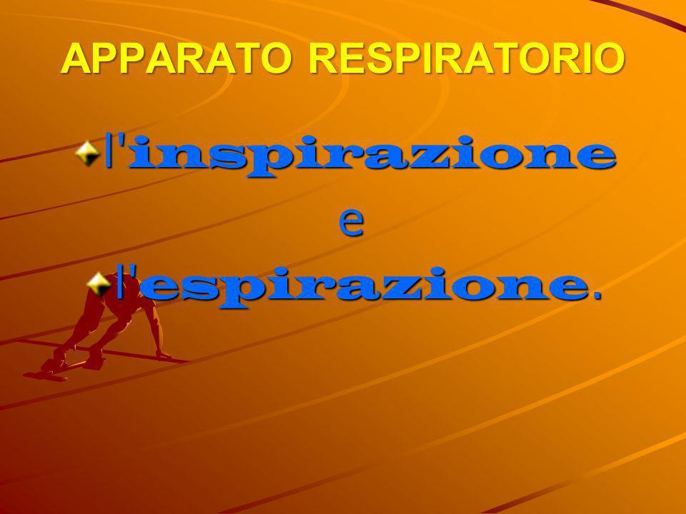 APPARATO RESPIRATORIO l' inspirazione e l' espirazione.