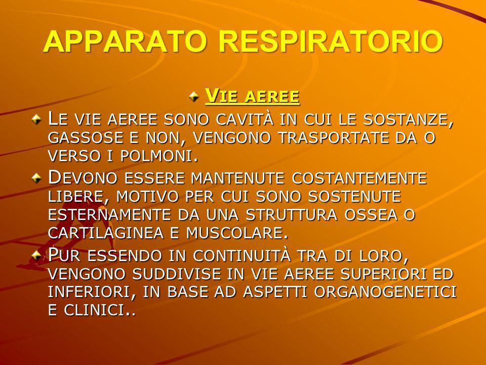 APPARATO RESPIRATORIO C APACITÀ VITALE = È LA SOMMA DEL VOLUME CORRENTE E DEI DUE DI RISERVA (3500-5000 ML ).