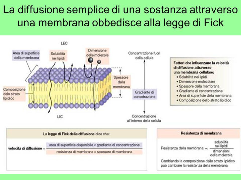 La diffusione semplice di una sostanza attraverso una membrana obbedisce alla legge di Fick