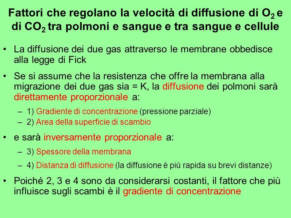 Fattori che regolano la velocità di diffusione di O 2 e di CO 2 tra polmoni e sangue e tra sangue e cellule La diffusione dei due gas attraverso le me