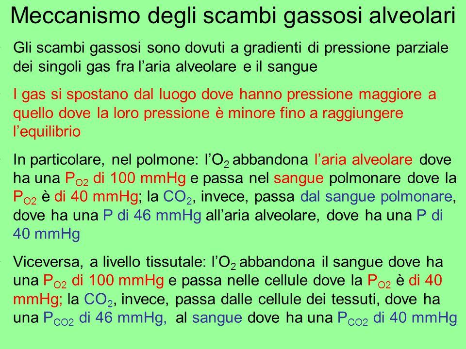 Meccanismo degli scambi gassosi alveolari Gli scambi gassosi sono dovuti a gradienti di pressione parziale dei singoli gas fra laria alveolare e il sa