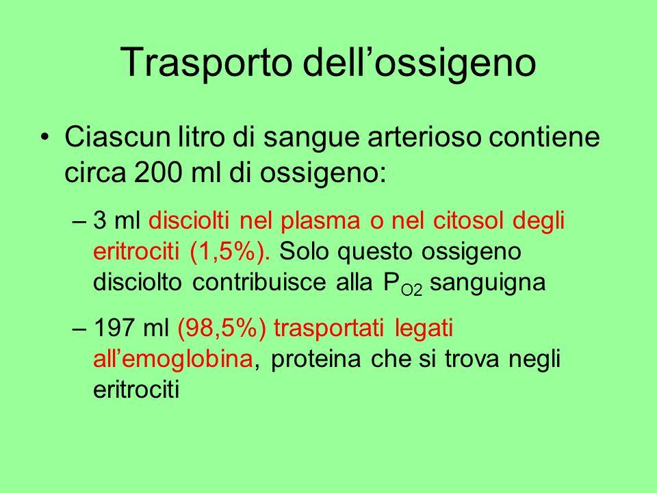Trasporto dellossigeno Ciascun litro di sangue arterioso contiene circa 200 ml di ossigeno: –3 ml disciolti nel plasma o nel citosol degli eritrociti