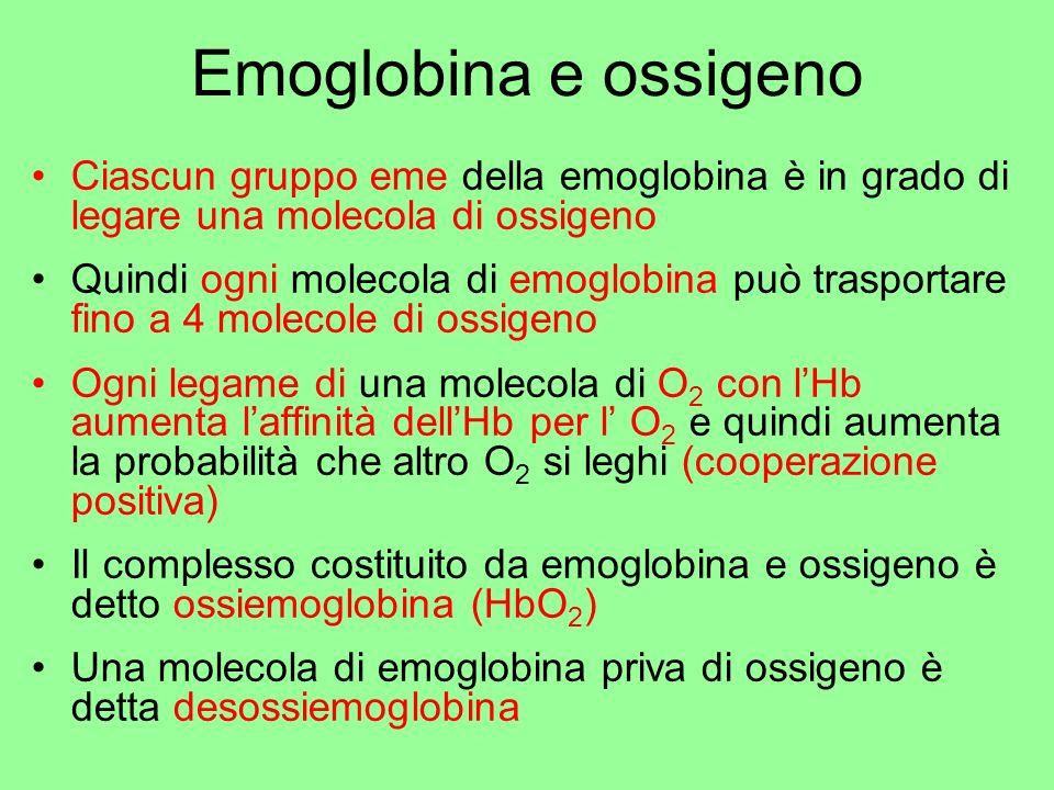 Emoglobina e ossigeno Ciascun gruppo eme della emoglobina è in grado di legare una molecola di ossigeno Quindi ogni molecola di emoglobina può traspor