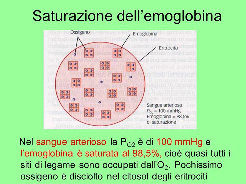 Saturazione dellemoglobina Nel sangue arterioso la P O2 è di 100 mmHg e lemoglobina è saturata al 98,5%, cioè quasi tutti i siti di legame sono occupa