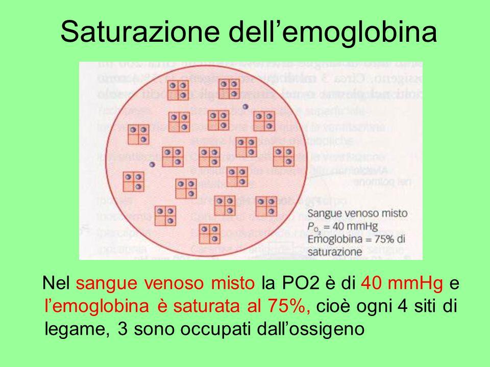 Saturazione dellemoglobina Nel sangue venoso misto la PO2 è di 40 mmHg e lemoglobina è saturata al 75%, cioè ogni 4 siti di legame, 3 sono occupati da