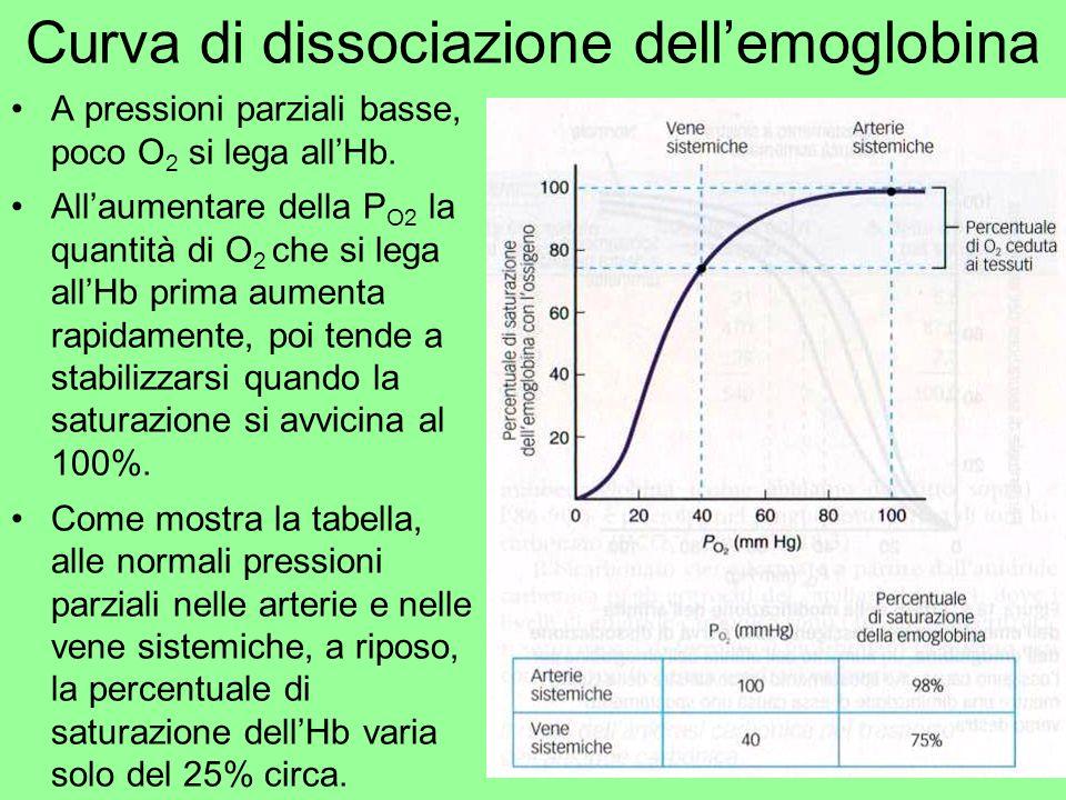 Curva di dissociazione dellemoglobina A pressioni parziali basse, poco O 2 si lega allHb. Allaumentare della P O2 la quantità di O 2 che si lega allHb