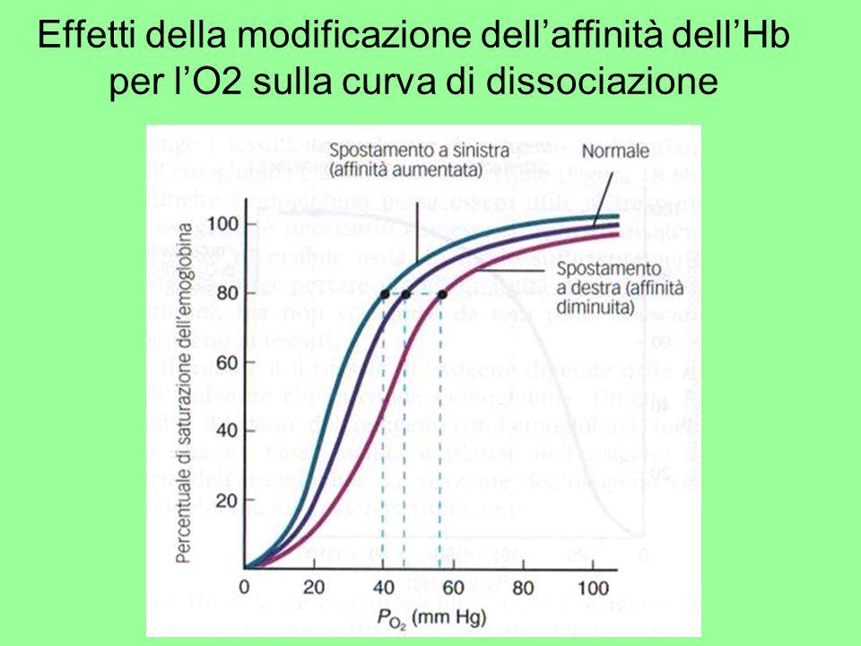 Effetti della modificazione dellaffinità dellHb per lO2 sulla curva di dissociazione