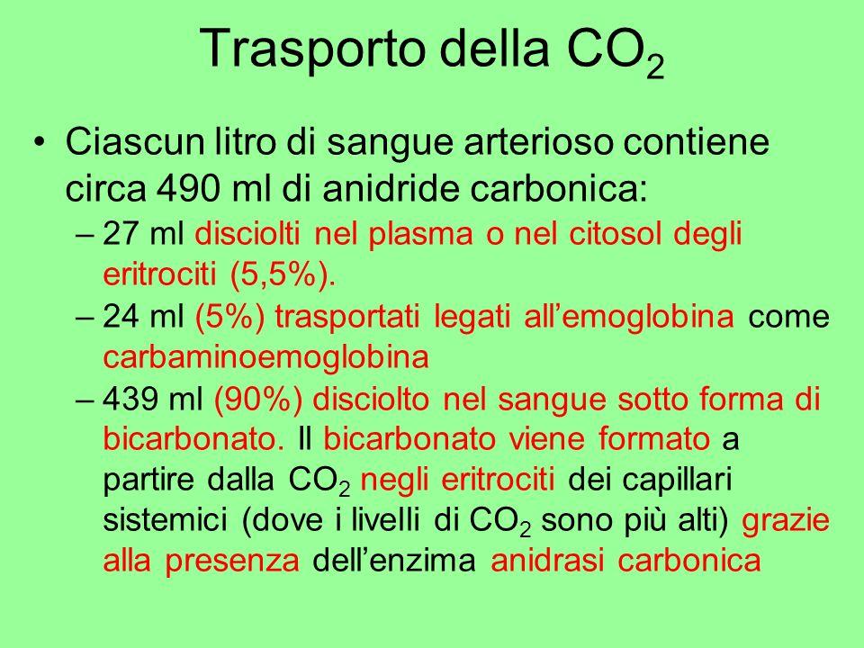 Trasporto della CO 2 Ciascun litro di sangue arterioso contiene circa 490 ml di anidride carbonica: –27 ml disciolti nel plasma o nel citosol degli er