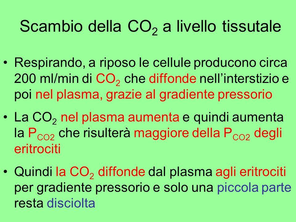 Scambio della CO 2 a livello tissutale Respirando, a riposo le cellule producono circa 200 ml/min di CO 2 che diffonde nellinterstizio e poi nel plasm