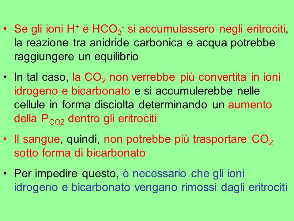 Se gli ioni H + e HCO 3 - si accumulassero negli eritrociti, la reazione tra anidride carbonica e acqua potrebbe raggiungere un equilibrio In tal caso