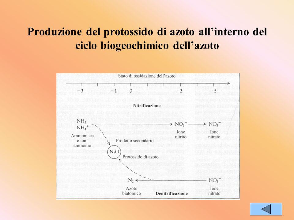 Produzione del protossido di azoto allinterno del ciclo biogeochimico dellazoto