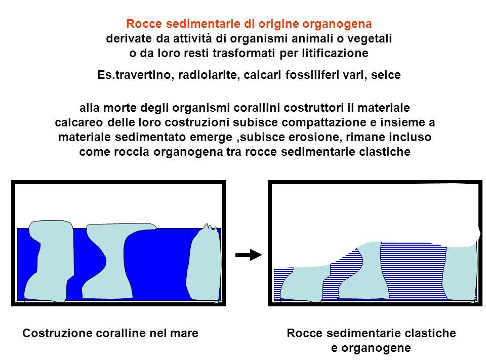 Rocce sedimentarie di origine organogena derivate da attività di organismi animali o vegetali o da loro resti trasformati per litificazione Es.travert