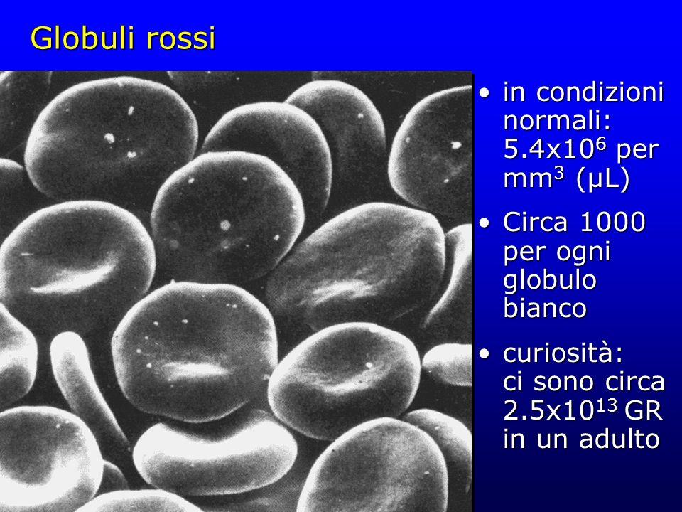Globuli rossi in condizioni normali: 5.4x10 6 per mm 3 (µL)in condizioni normali: 5.4x10 6 per mm 3 (µL) Circa 1000 per ogni globulo biancoCirca 1000